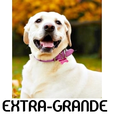 Coleira para Cachorro Grande Porte com Nome