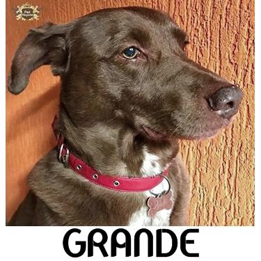 Coleira para Cachorro Grande com Nome Gravado