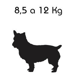 Indicado para o Peso: 8,5 a 12 Kg