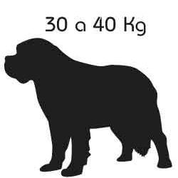 Roupa de Cachorro Colosso