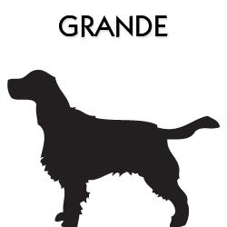 Coleiras, Peitorais e Guias para Cães de Grande Porte