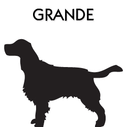 Coleira para Cachorro Grande