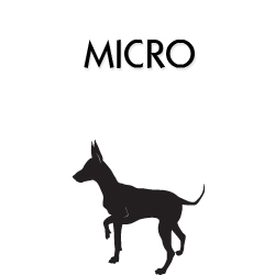 Coleira para Cachorro Filhote Mini e Micro