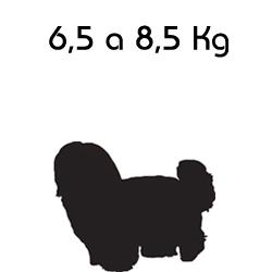 Roupa para Cachorro Grande